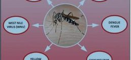Top 6 Diseases That Mosquitoes Gives Which You Dont Know
